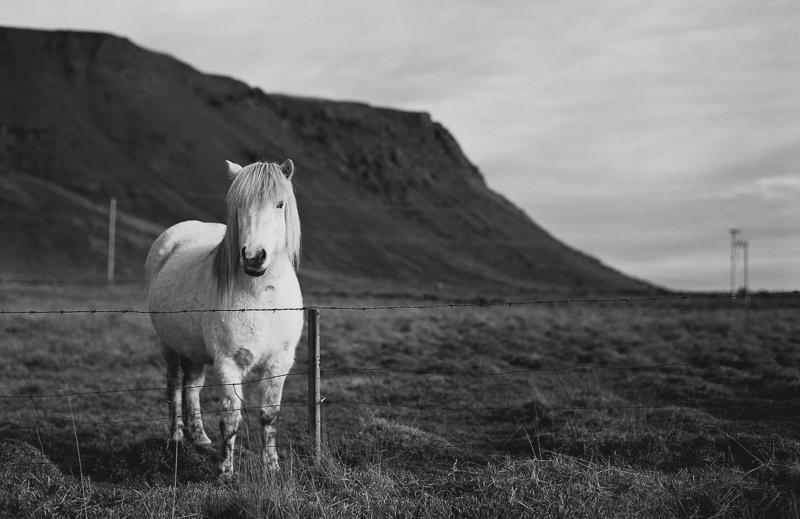 Iceland-1001