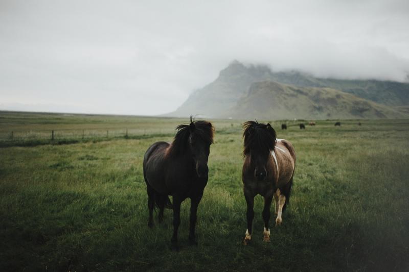 Iceland-Wedding-1007